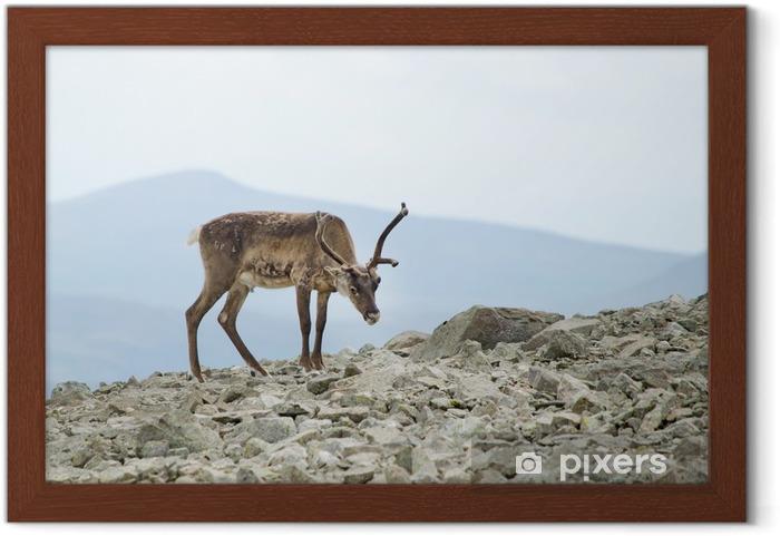 Póster Enmarcado Montañas de renos - Temas