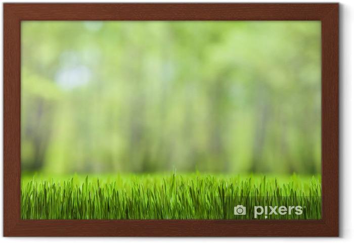 Masaüstü Duvar Kağıdı Yeşil çimen Ve Orman Doğa Arka Plan çerçeveli