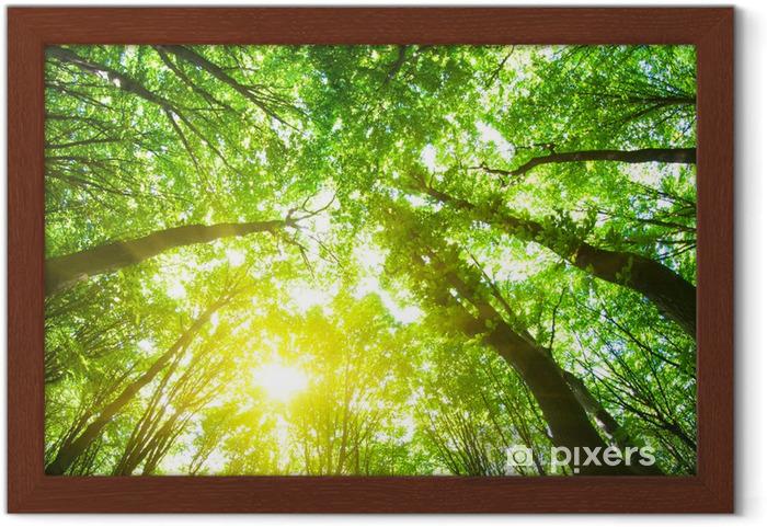 Póster Enmarcado Árboles forestales. - Destinos