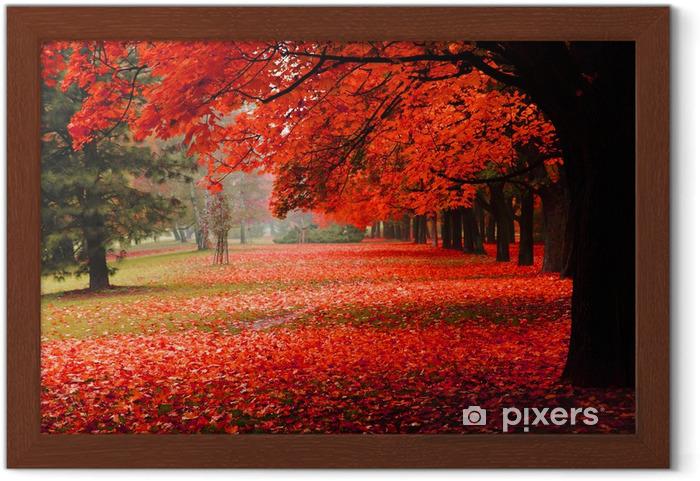 Plakat w ramie Czerwony jesienią w parku - Przeznaczenia