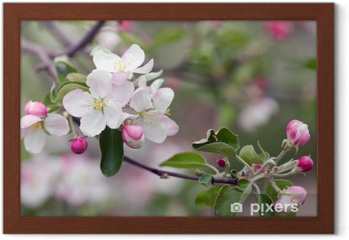 Póster Enmarcado Apple blossom - Manzanos