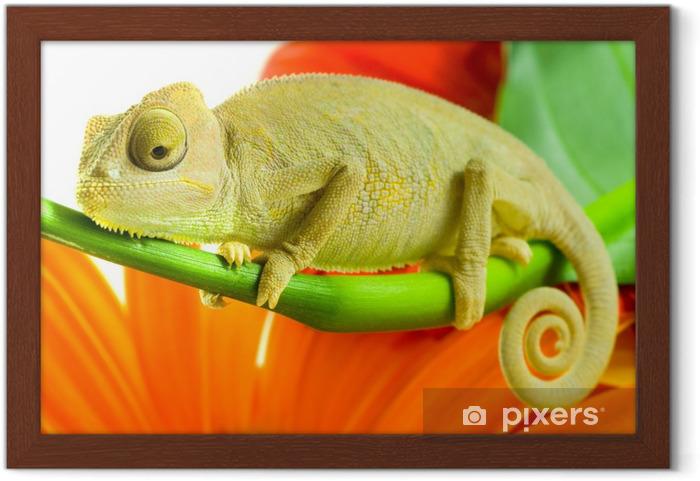 Plakat w ramie Kameleon na kwiat. - Tematy