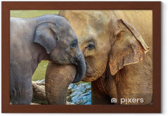 Poster en cadre Éléphant et bébé éléphant - Mammifères