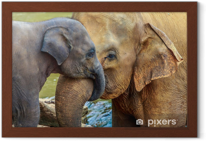 Póster Enmarcado Elefante y del elefante del bebé - Mamíferos