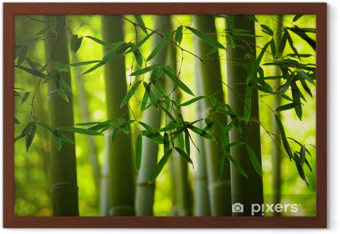 Plakat w ramie Bambus lesie tła - Tematy