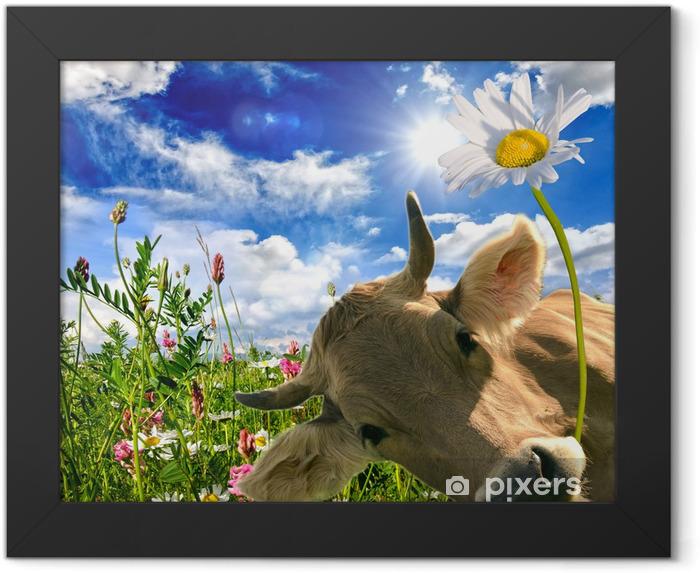 Póster Enmarcado Alles Liebe zum Geburtstag: Kuh schenkt Eine Blume :) - Temas