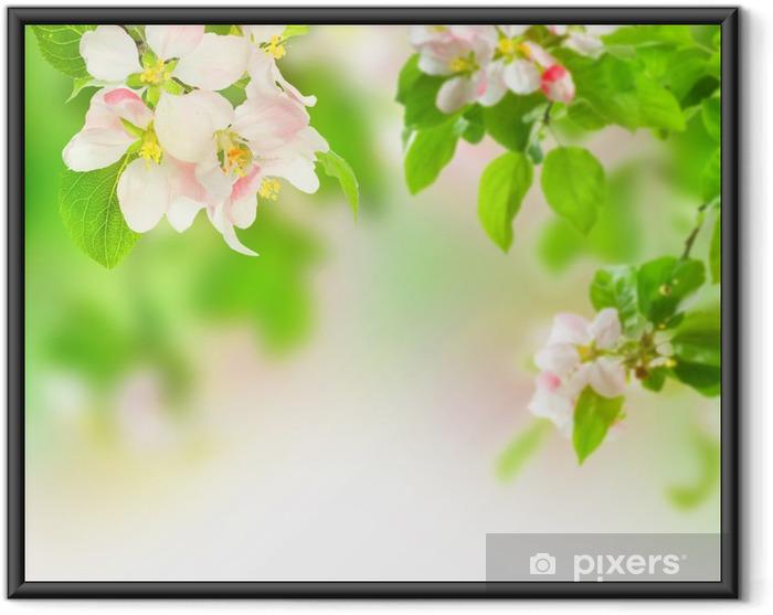 Plakat w ramie Kwiat jabłoni - Jabłonie