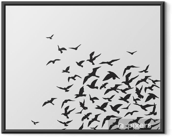 Ingelijste Poster Vogelsachtergrond - Thema's