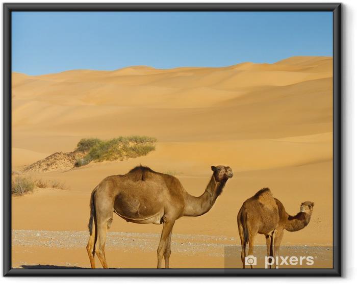 Ingelijste Poster Kamelen in de woestijn - Awbari zand zee, Sahara woestijn, Libië - Woestijn