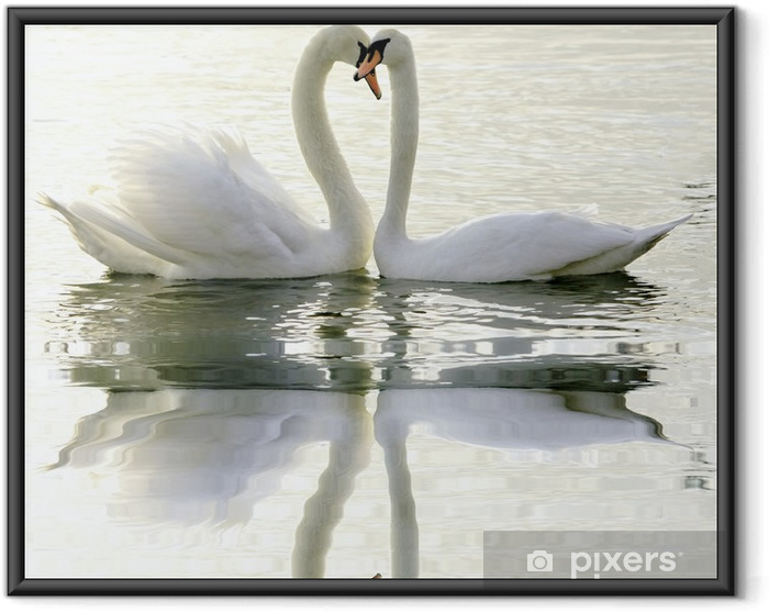 Ingelijste Poster Loving Swans - Zwanen