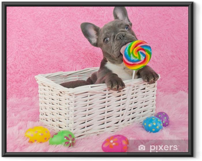 Plakat w ramie Easter puppy - Buldogi francuskie