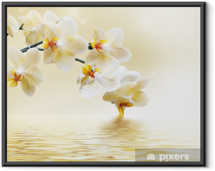 Póster com Moldura Beautiful white orchid -