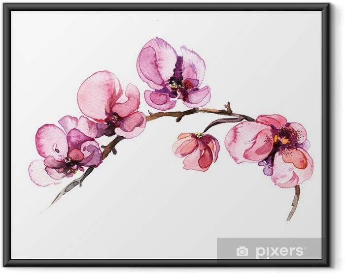 Póster com Moldura A aguarela floresce a orquídea isolada no fundo branco - Plantas e Flores