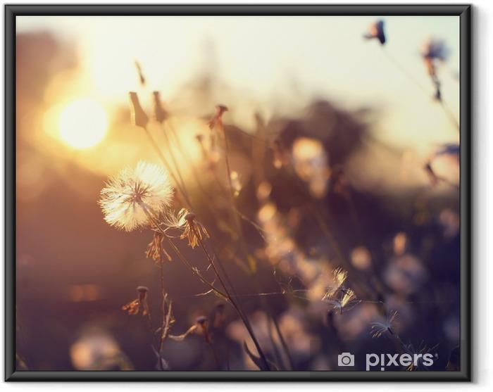 Çerçeveli Poster Akşam sonbahar doğa arka plan, turuncu günbatımı alanında güzel çayır karahindiba çiçekleri. bağbozumu filtre efekti, seçmeli odak noktası, sığ alan derinliği - Çiçek ve bitkiler