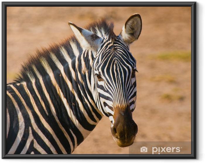 Plakat w ramie Głowica Zebra, Park Narodowy Amboseli, Kenia - Tematy