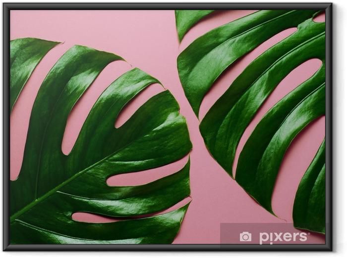 Innrammet plakat Store ekte monstera blader på en rosa bakgrunn. tropisk tema bakgrunn i en trendy minimalistisk flat stil. - Hobby og Fritid