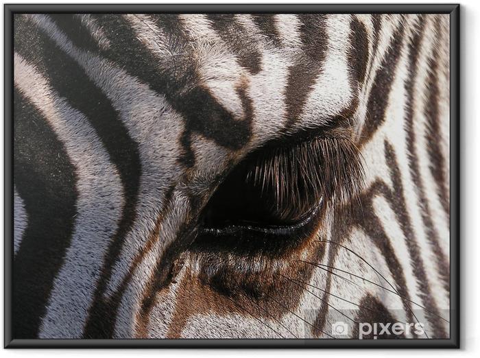 Plakat w ramie Zebra - zbliżenie na oko - Tematy