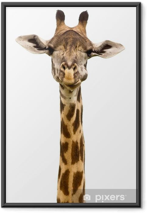 Ingelijste Poster Girafhoofd Geïsoleerd - Muursticker