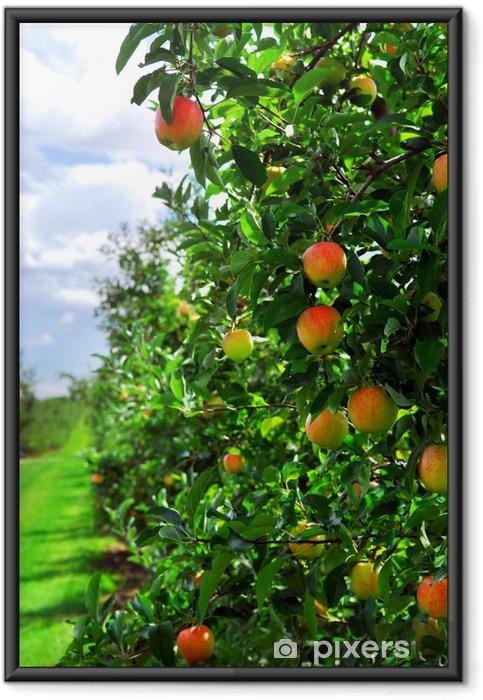 Póster Enmarcado Manzanas maduras en manzanos sucursales en el huerto - Manzanos