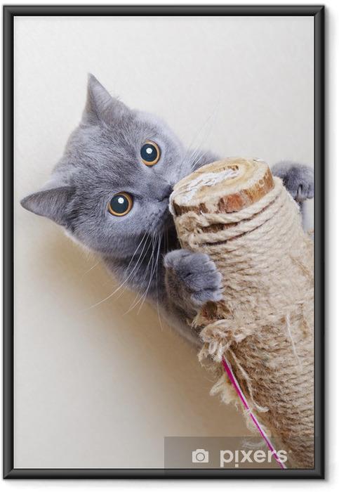 Plakát v rámu Britská kočka poškrábání příspěvky - Témata