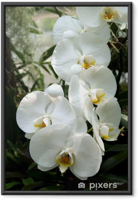Póster com Moldura white orchid - Temas