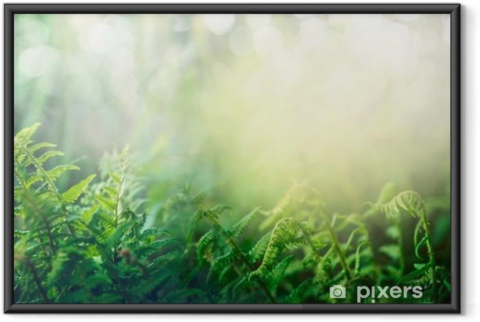 Plakat w ramie Paproć w lasów tropikalnych dżungli ze światłem słonecznym, na zewnątrz przyroda tło, transparent - Krajobrazy