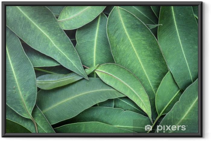 Ingelijste Poster Eucalyptus bladeren - Bloemen en Planten
