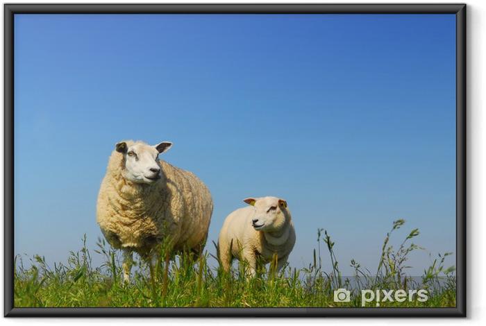Ingelijste Poster Sheep - Zoogdieren