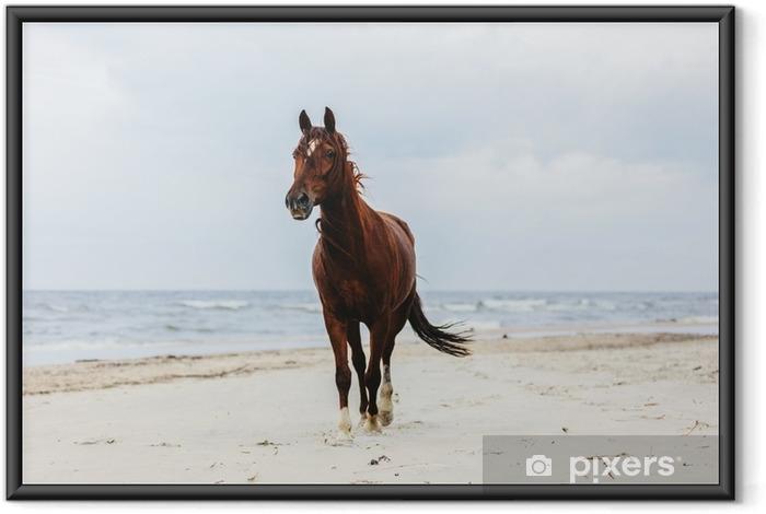 Poster en cadre Cheval de la baie solitaire trottinant sur la plage au bord de la mer. - Animaux