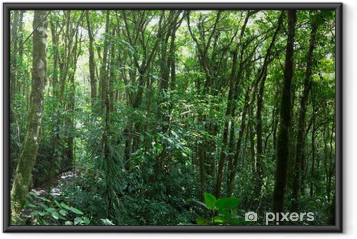Ingelijste Poster Nevelwoud in Costa Rica - Bossen