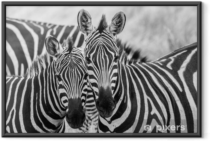 Plakat w ramie Zebry w miłości - Tematy