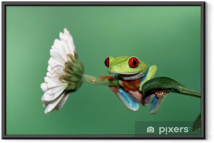 Plakat w ramie Czerwony eyed drzewa żaba - Inne Inne