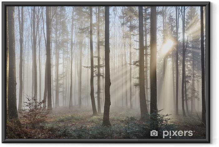 Poster en cadre Rayons de soleil à travers la forêt brumeuse - Thèmes