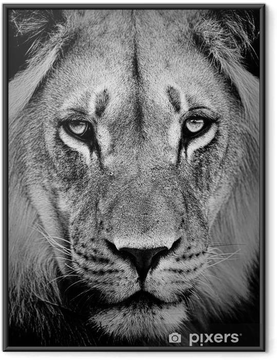 Çerçeveli Poster Aslan portre -