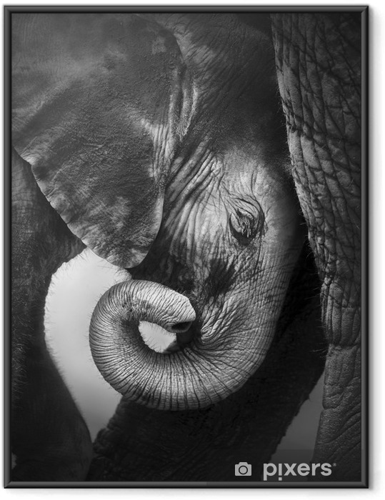 Çerçeveli Poster Konfor arayan Bebek fil -