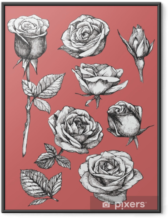 Innrammet plakat Sett med svært detaljerte håndtegnede roser. vektor - Planter og Blomster