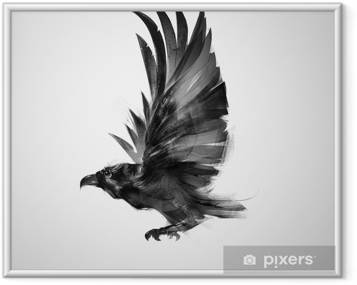 Plakát v rámu Izolovaný graficky letící pták černá vrána - Zvířata