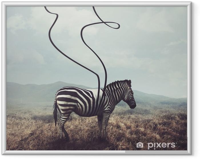 Çerçeveli Poster Zebra ve çizgili - Hayvanlar