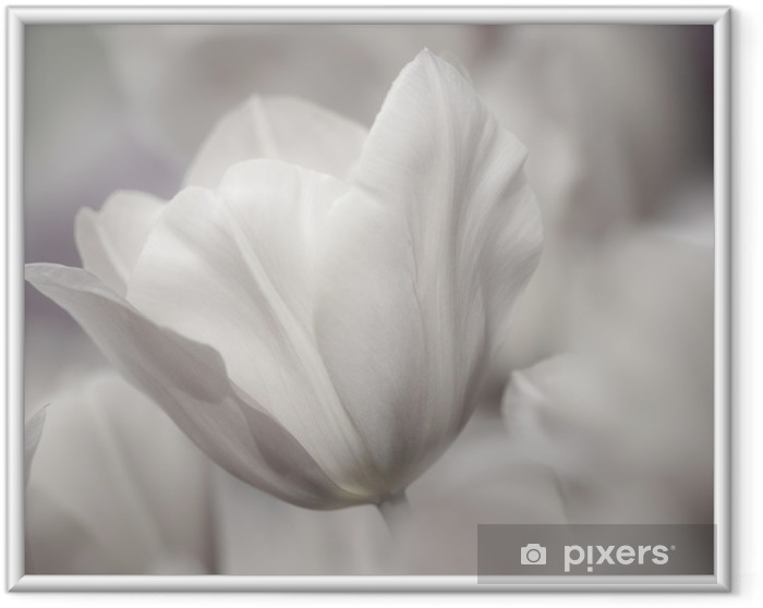 Póster Enmarcado La bella arte de primer plano Tulipanes, confuso y nítido - Temas