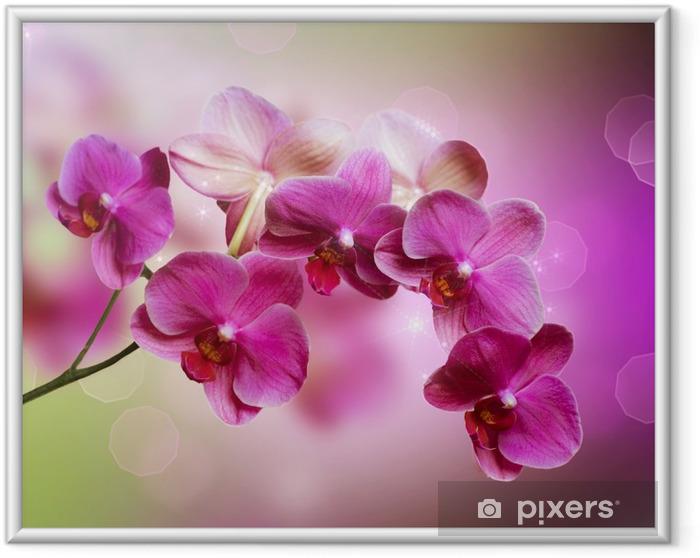 Poster i Ram Orchidea -