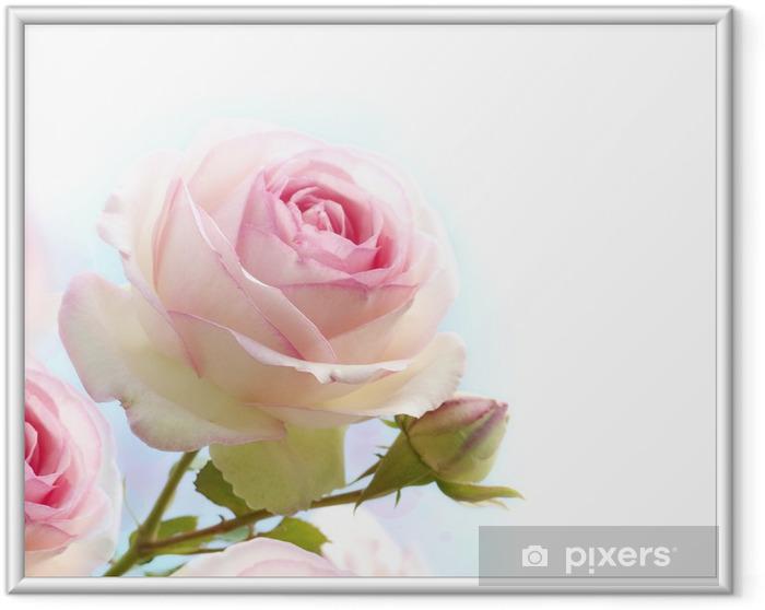 Póster Enmarcado Rosa rosa sobre fondo blanco azul - Temas
