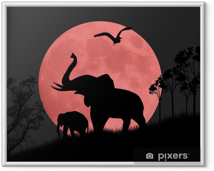 Ingelijste Poster Silhouet weergave van olifanten 's nachts - Olifanten
