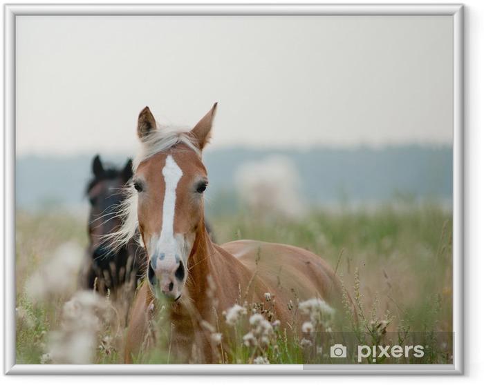 Plakat w ramie Konie w polu - Tematy