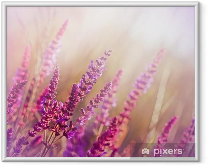 Ingelijste Poster Wilde bloem (weide bloem) - Stijlen