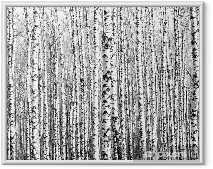Ingelijste Poster Voorjaar stammen van berken zwart en wit - Stijlen