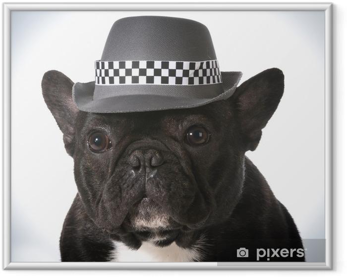 Plakat w ramie Pies ma na sobie kapelusz - Buldogi francuskie