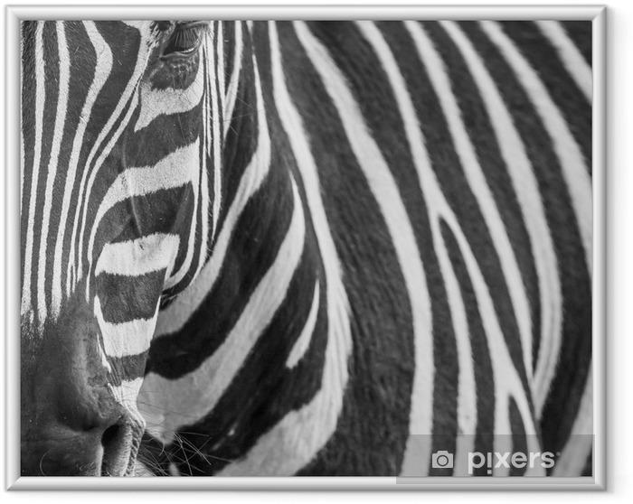 Plakat w ramie Zebre zwierząt portret - Tematy