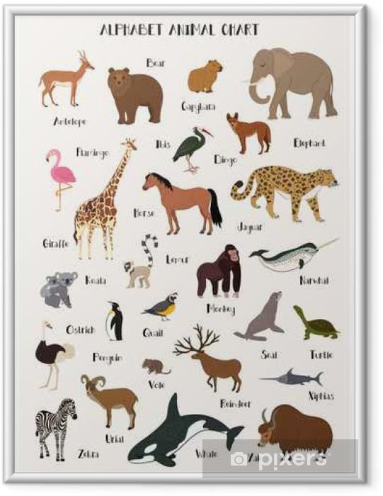 Ingelijste Poster Alfabet dier grafiek set voor kinderen - Dieren