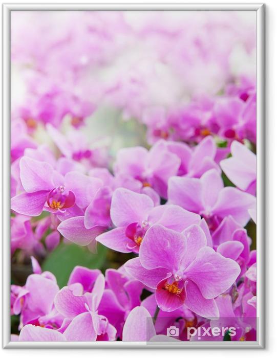 Póster com Moldura beautiful of tropical orchid flower blooming show shallow depth - Temas