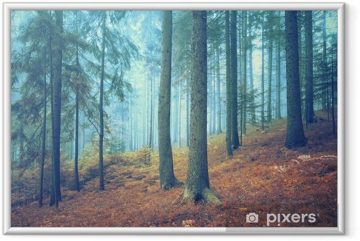 Plakat w ramie Piękne marzycielski lasów iglastych. Efekt koloru filtr. - Krajobrazy